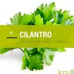 … que el alimento sea tu medicina: El cilantro